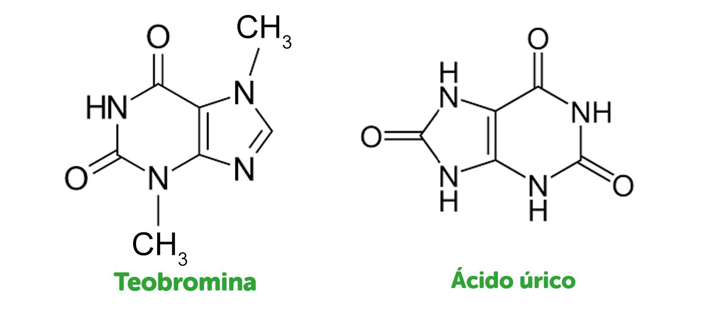 Teobromina vs ácido úrico